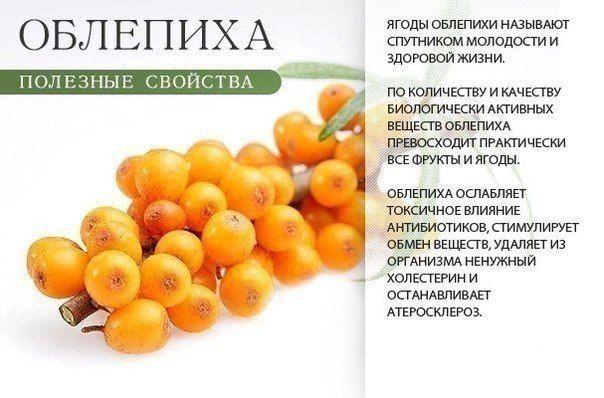 полезные оранжевые фрукты, овощи и ягоды