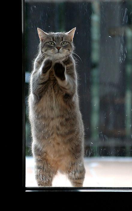 who shut the door ...: Cats, The Doors, Cat Baby, Cute Cat, Fat Cat, I Love Cat, Cat Cat, Adorable Animal, Baby Cat