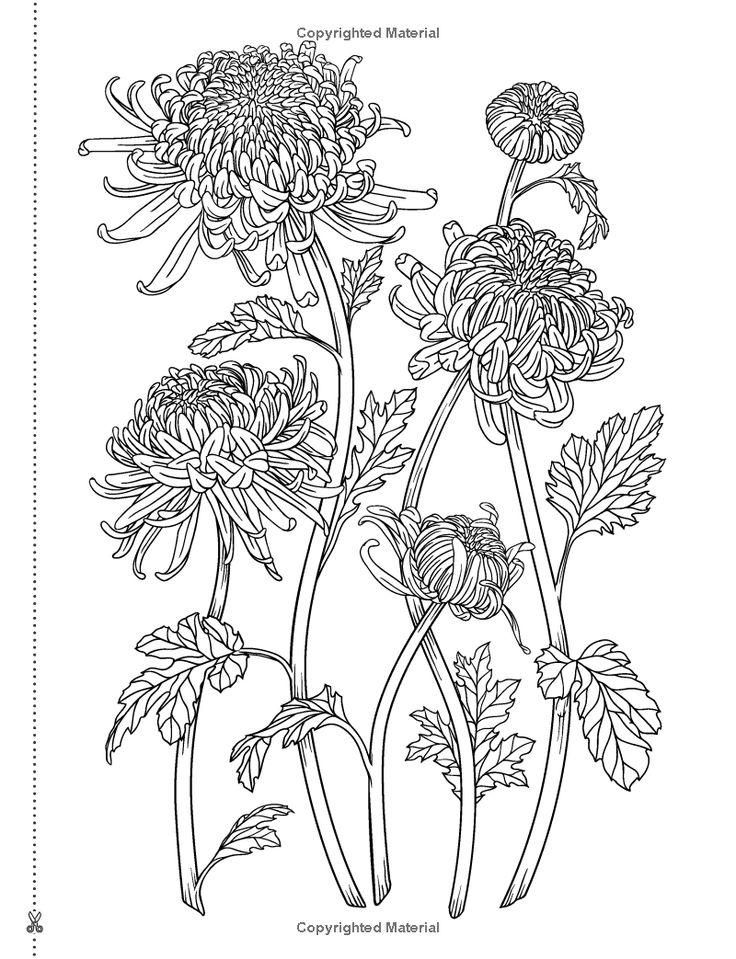 The 130 Best Adult Coloring Pages Images On Pinterest