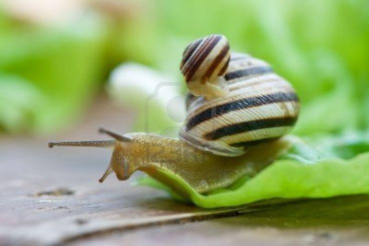 snails - Google Search