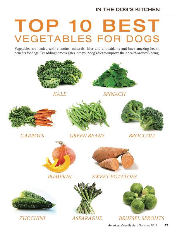 Top 10 Best Vegetables For My Dog Fur Babies Pinterest Dog
