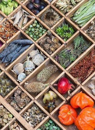 17 Best ideas about Seed Storage on Pinterest Companion planting