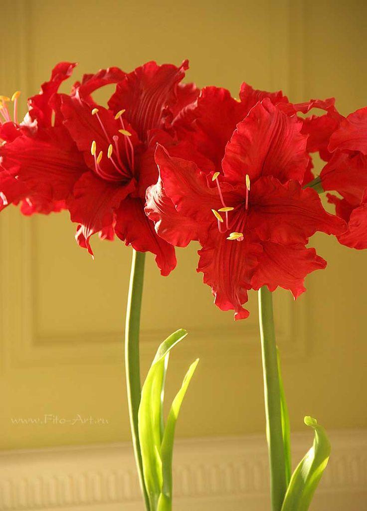 Clay flowers Композиции : Красные амариллисы. Керамическая флористика - Fito Art