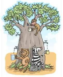 The REAL truth about water in Baobab trees!  There's a bit of a myth out there that you can tap water out of a baobab which is illustrated by this delightful cartoon. Read the truth here: http://www.ecoproducts.co.za/baobab-science/natures-water-tank