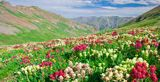 Valley of Flowers - Click the image for more info