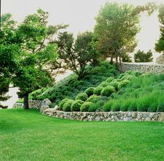 ornamental grasses on hills - Google Search