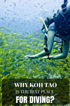 Why Koh Tao is the Best Place for Diving?  #snorkeling #diving #travel #travelling #destinations #travelblogger #travelstories #travelinspiration #besttravel #tourism #travelwriter #travelblog #traveldeeper #traveltheworld  http://adventuresoflilnicki.com/