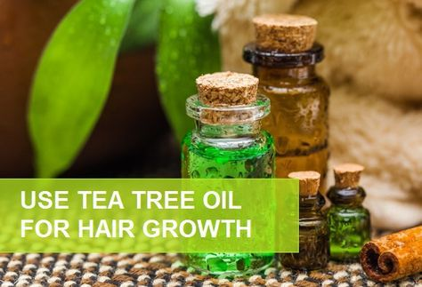 How to Use Tea Tree Oil for Hair Growth and Dandruff. These tea tree oil recipes are good for hair growth, excessive hair fall, hair loss and baldness cure.