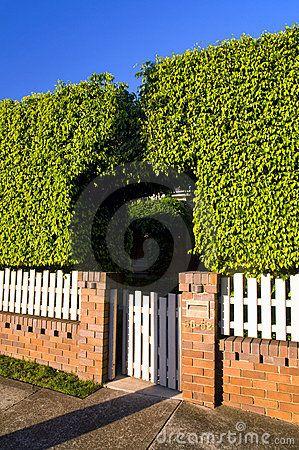 Bush, Wooden And Bricks Fence