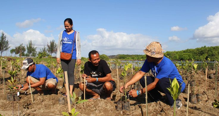 The Coral Triangle Day 2015 - Mangrove Planting