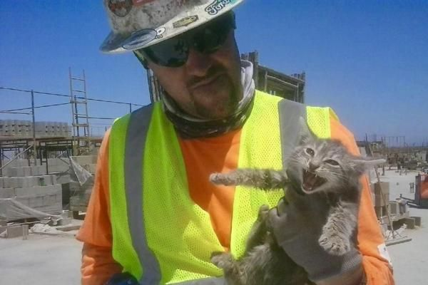 Workers at a construction site for a new county jail in California discovered a kitten that had been living in the walls for several months.
