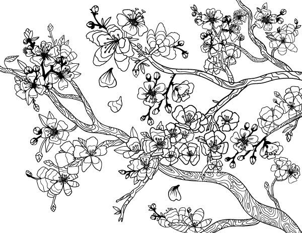 66 best diseños - cerezos images on pinterest | drawings, flowers ... - Cherry Blossom Tree Coloring Pages