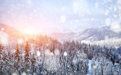 Snowfall over the forest Nature desktop wallpaper download