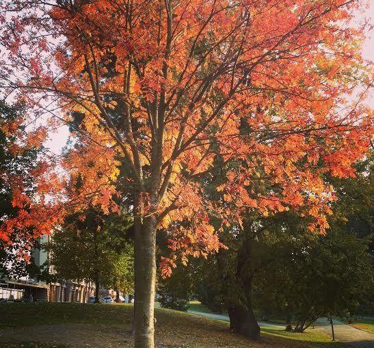 Fall in Hämeenpuisto. City of Tampere. Finland.