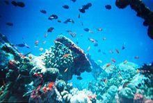 Marine biology - Wikipedia