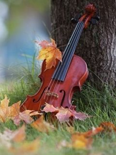 Download Free Nature Violin Mobile Wallpaper Contributed By Hilarystoll Is Uploaded