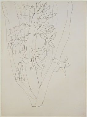 Ellsworth Kelly, Hyacinth, 1949, Ink on paper, 41,9 x 30,5 cm, Private collection.: