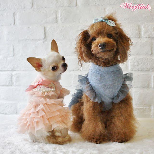 WOOFLINK - Hip designer dog clothes: Dress