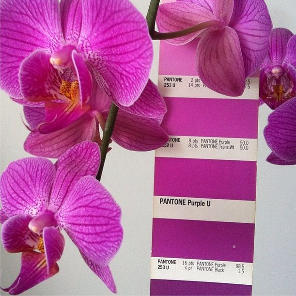 Pantone color of 23014 Orchid