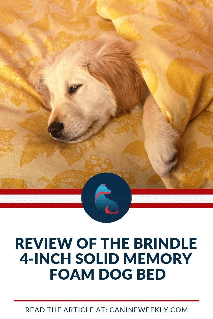 Brindle 4Inch Solid Memory Foam Dog Bed Review Dog bed