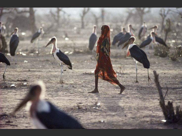 """Jean-Claude Coutausse : """"Je marche au milieu des morts pendant un mois et demi, pratiquement seul. Lorsque Médecins sans frontières m'appelle au début de la grande famine en Somalie, en 1992, tous mes collègues sont partis couvrir les jeux olympiques de Barcelone. Je décide de faire un crochet par le camp de Liboï, à la frontière au nord du Kenya. (…) Cette photo est presque devenue un symbole de ce drame."""""""