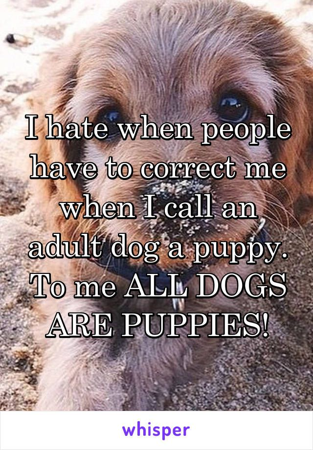I hate when people have to correct me when I call an adult dog a puppy. To me ALL DOGS ARE PUPPIES!