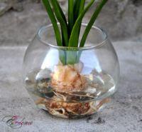 (1) Gallery.ru / Нарциссы в стекле - Нарциссы - decoflower