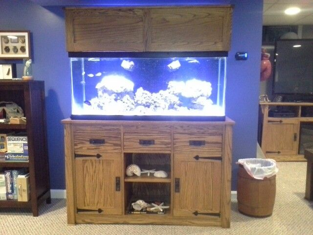 Man Cave With Tank : Best reef tank images on pinterest fish aquariums