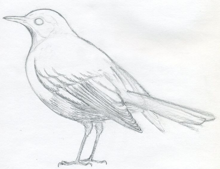 Easy Line Drawings Of Animals : 337 best how to draw animals images on pinterest drawing ideas