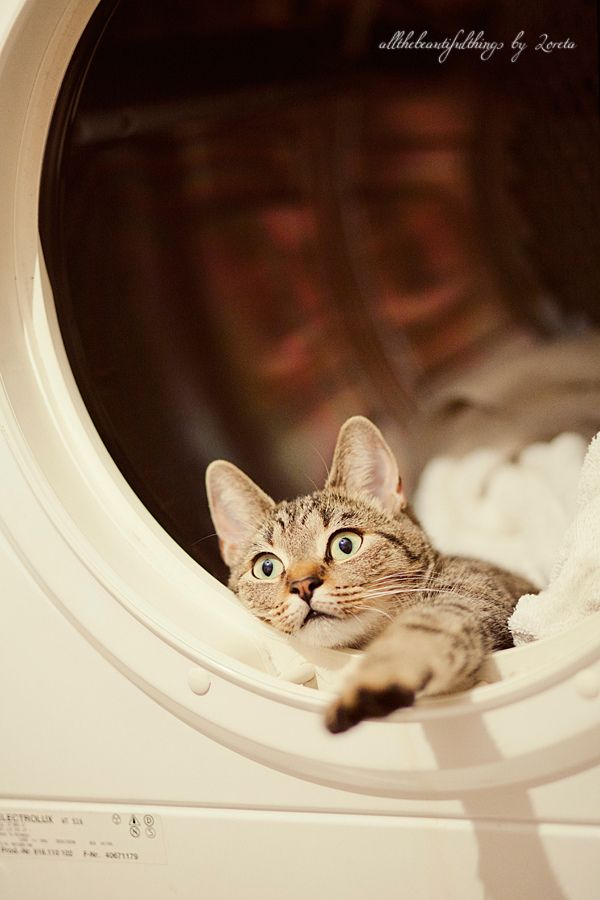 how to get cat hair clothes in washing machine