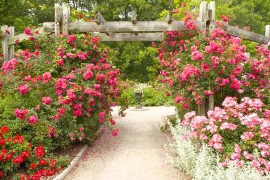 Jardín - Getty Images