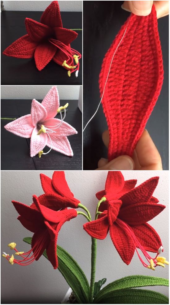 Crochet Amaryllis Flower