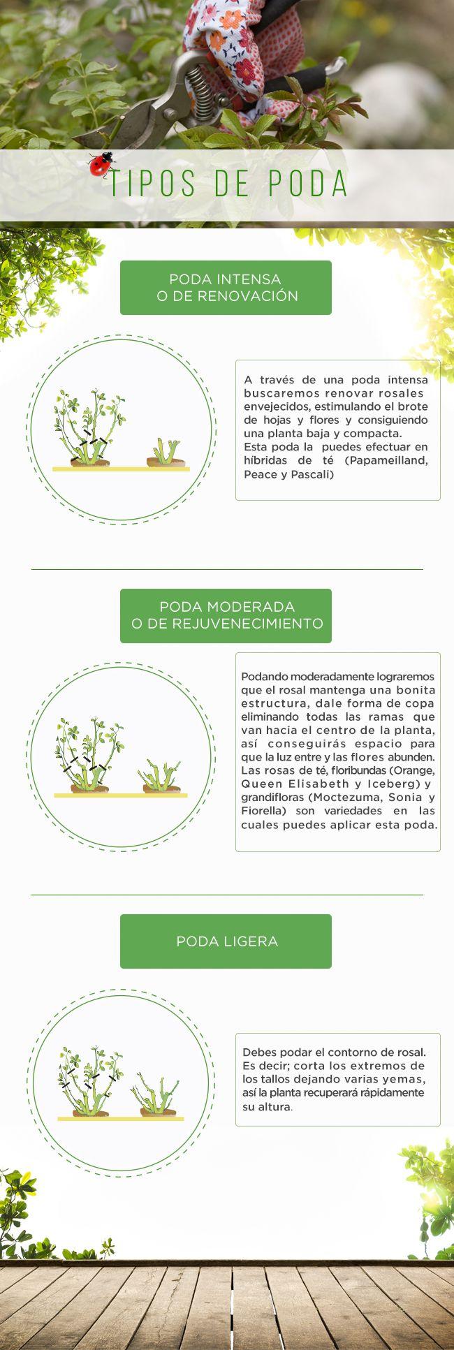 #Poda #Jardín #Easy #Primavera #PasoApaso