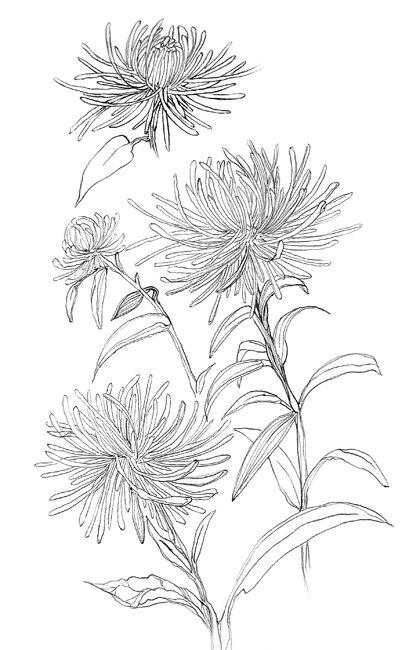 best 25  white chrysanthemum ideas on pinterest