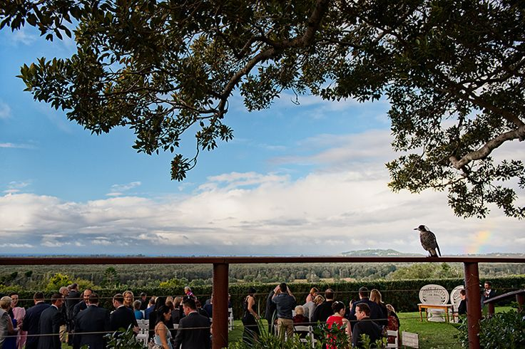 The paradise of the Figtree restaurant, overlooking Byron Bay. Pic Richard Windeyer. Byron Bay Wedding Celebrant.