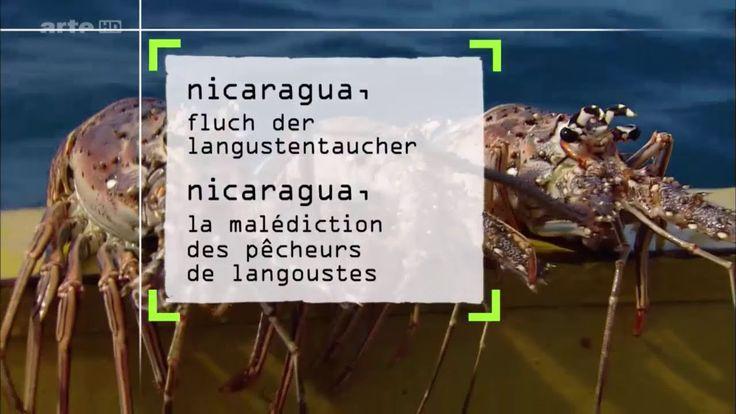 Die Angehörigen des indigenen Volkes der Miskito an der Küste Nicaraguas sind begnadete Taucher. Um an die wertvollen karibischen Langusten zu kommen, tauchen sie bis zu 40 Meter tief. Zum Schutz der Indianer soll das Tauchen in zwei Jahren eingestellt werden. Doch dagegen wehren sich die Miskito.   #360° Geo #ARTE #baumdokus #deutsch #doku #Dokumentation #GEO (Magazine) #german #oragen #oragen baumdokus #orangen #orangen baumdokus #orangenbaum #orangenbaumdokus #reportage