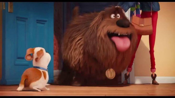 Película Mascotas 2016 Tráiler Oficial, por azar, Porazar.com, porazarcom, todo pasa por azar, cine, películas