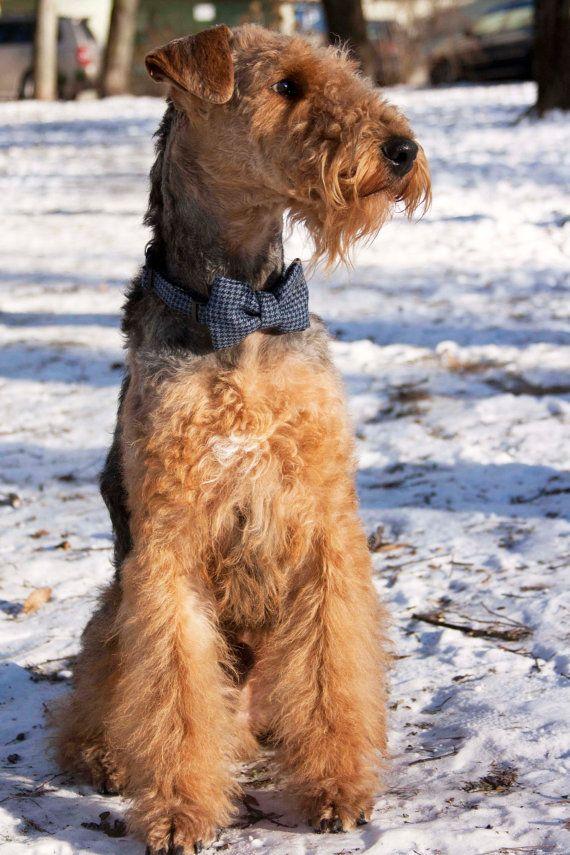 Dog bow tie / Plaid blue dog collar and bow tie set / Dog bow tie/ Classic dog bowtie