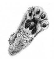 Уроки мастерства - Методические указания по рисованию больших кошек.