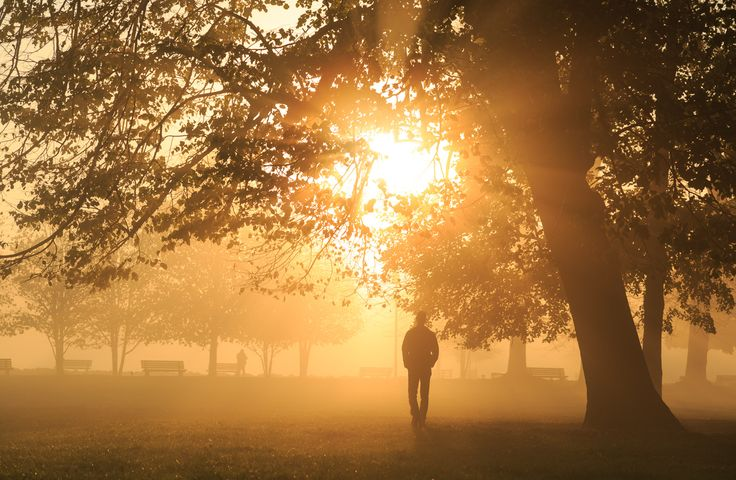 Blinded by the light - Just walking in foggy Parc de la Tete d'Or in Lyon during a foggy, autumn sunrise.