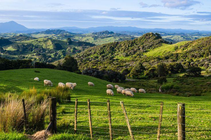 Neuseeland Tipps und Nützliches, das du vor einer Neuseeland Reise wissen musst. Visum, Kosten, Flüge. ➤ Neuseeland Reisetipps für den Urlaub ansehen.