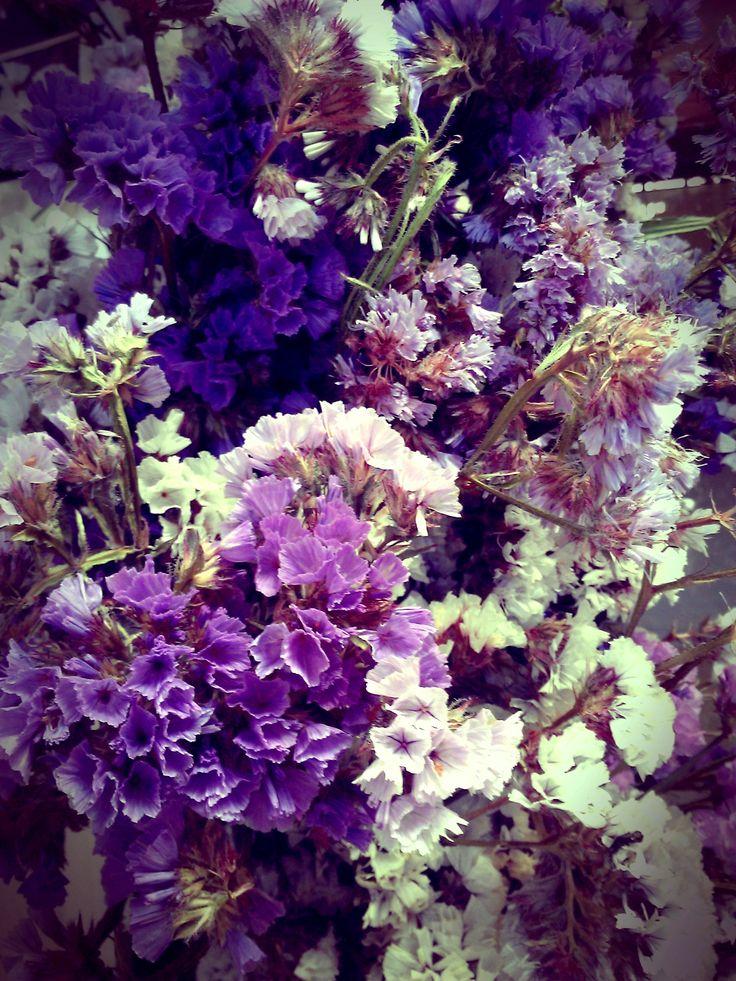 55 best FLORES SECAS images on Pinterest Dry flowers, Dried - flores secas
