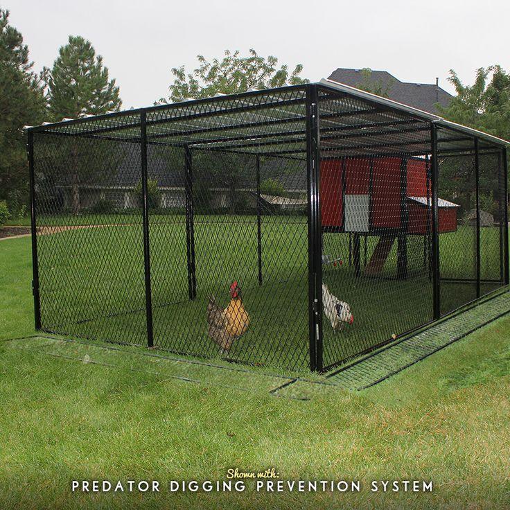 13 best chicken coops images on pinterest chicken coop for Chicken run for 6 chickens