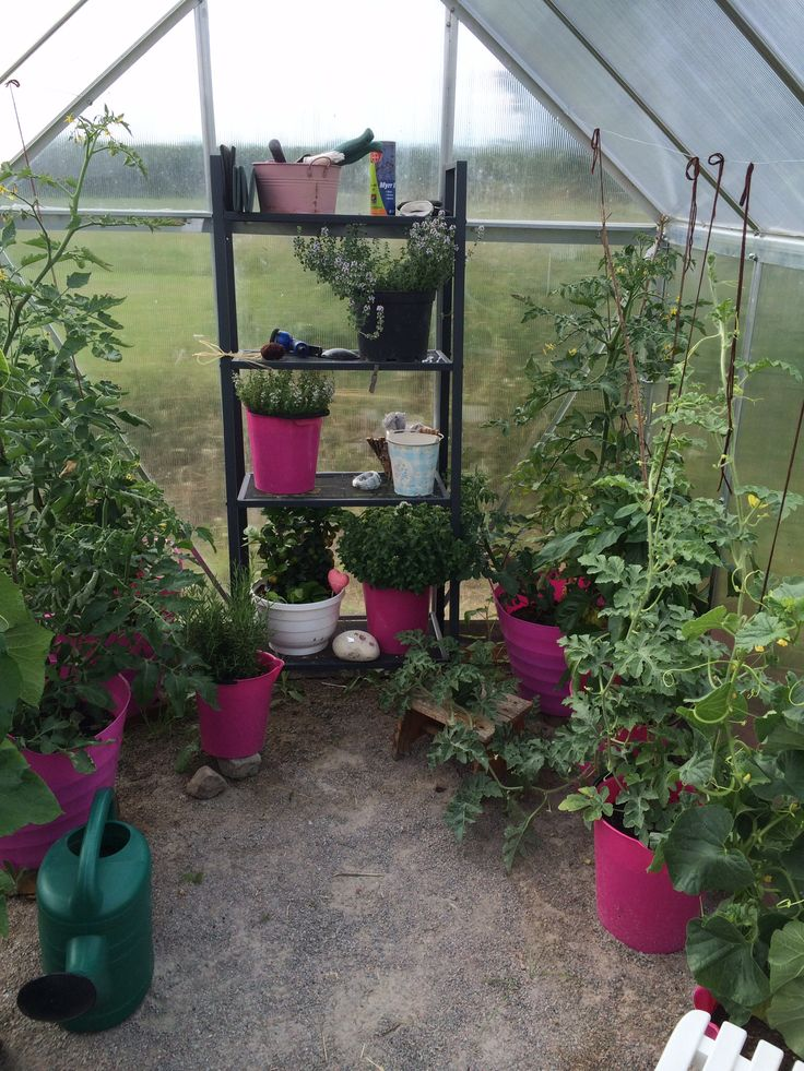 Odling i ett litet hobbyväxthus