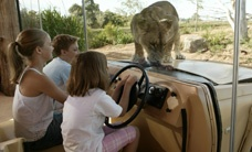 Lions up close at Werribee Open Range Zoo!
