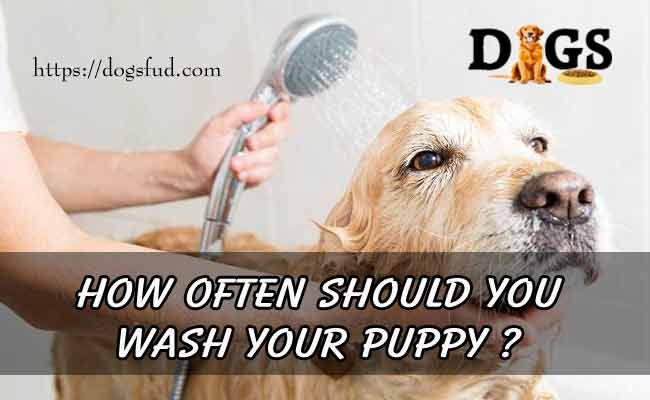 How Often Should You Wash Your Puppy Tips On Dog Bathing
