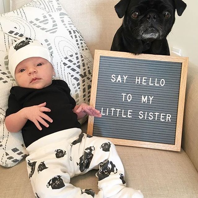 Meet Charlie's @thispugslife lil' sister Maya Rose, such a cute pair. Thanks to Mommy for sharing the photo!  --------  Our organic cotton Pug print leggings and hat are in our Etsy shop, link in bio.    #monofaces