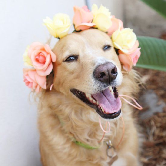Make simple flower crowns (or collars) for your pups.  perfect for a bridal shower or spring wedding!
