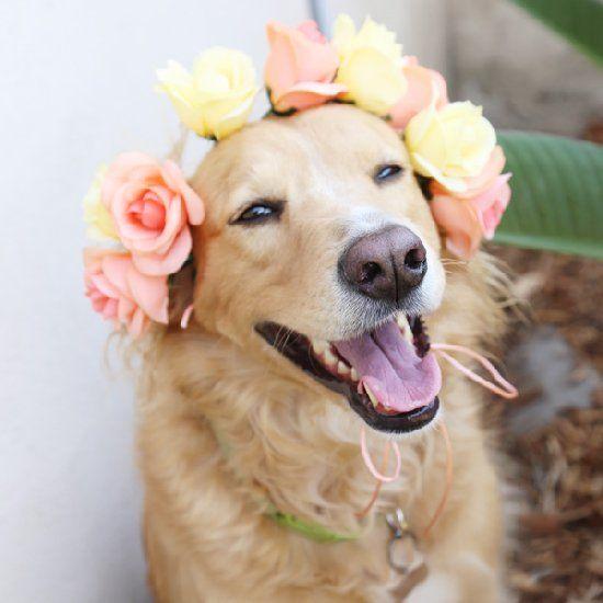 una corona de las flores para una perra, detalles de la boda
