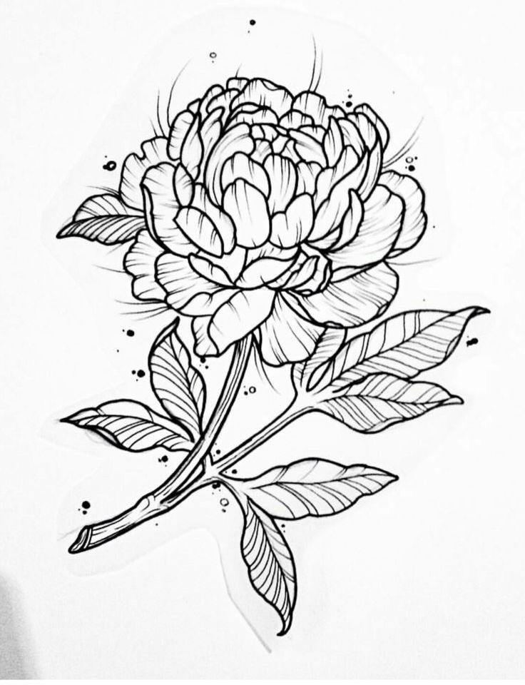 best 25 peony drawing ideas on pinterest peonies tattoo peony and flower outline tattoo. Black Bedroom Furniture Sets. Home Design Ideas